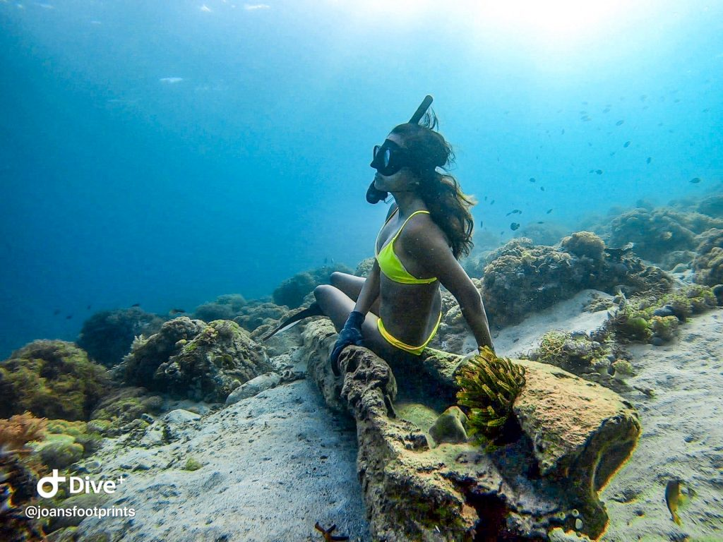 A Mermaid's Life