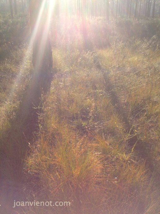 2012-1103 Sunrays