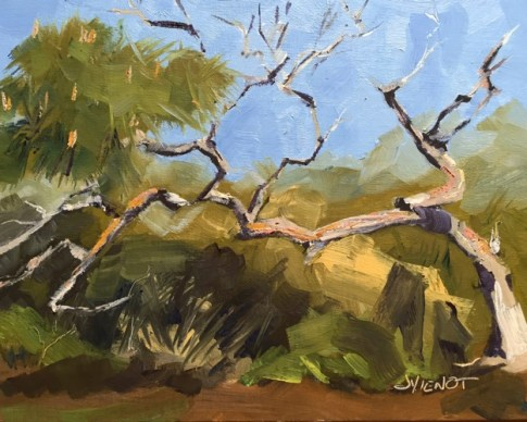 Oil painting of ancient scrub pine on St. George Island