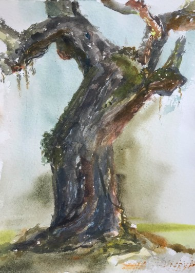Watercolor study of a very old live oak tree on Jekyll Island in Georgia