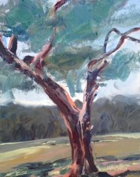 Cedar at Camp Helen, study