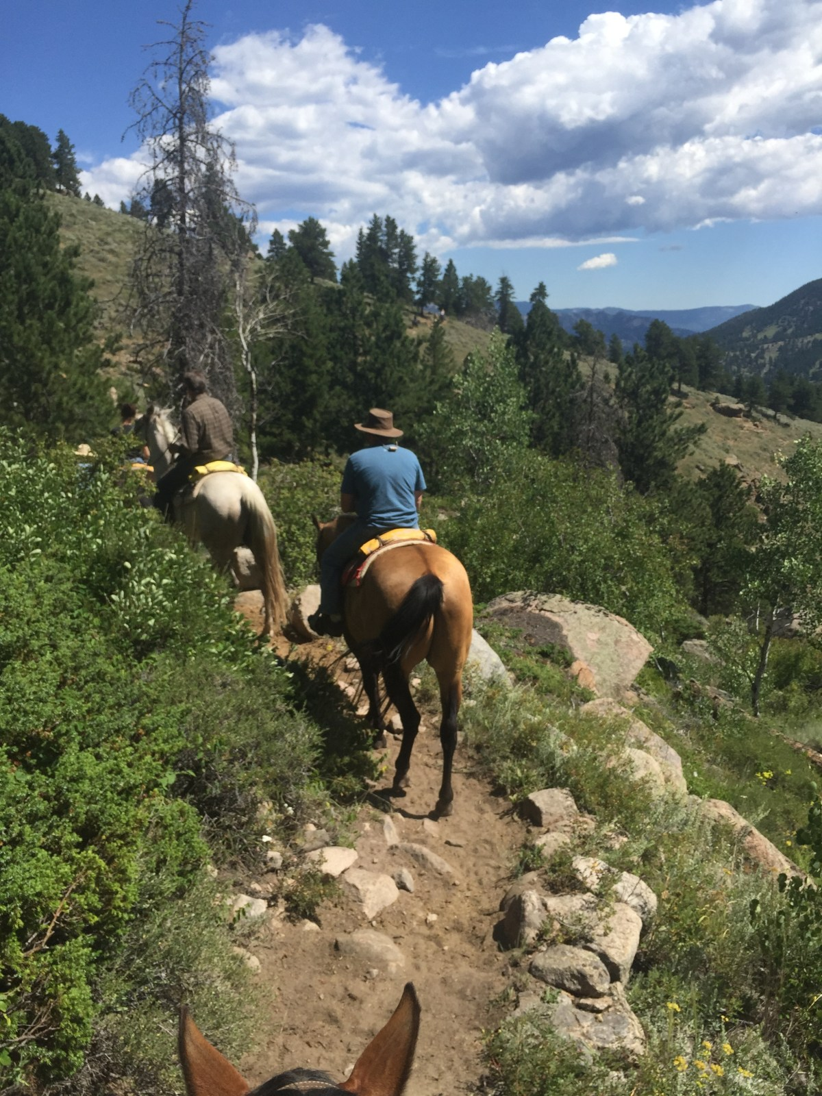 Five Lessons From A Horse