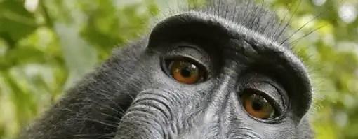 O autoretrato do macaco