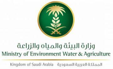 وزارة البيئة والمياه تعلن عن وظائف في مختلف مناطق المملكة