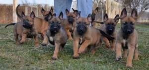 PuppiesToTheRescure!