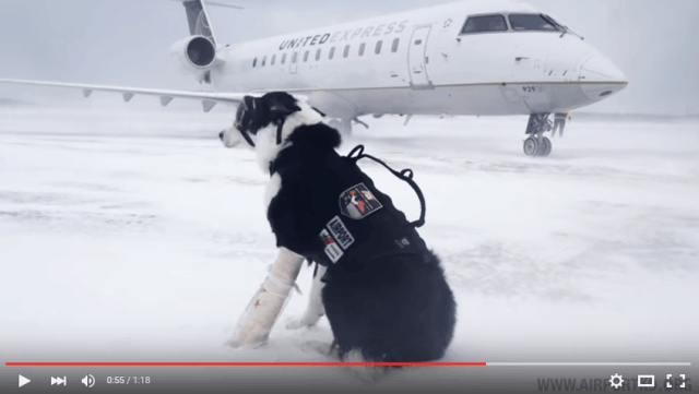 Traverse City's Airport Guard Dog you tube channel