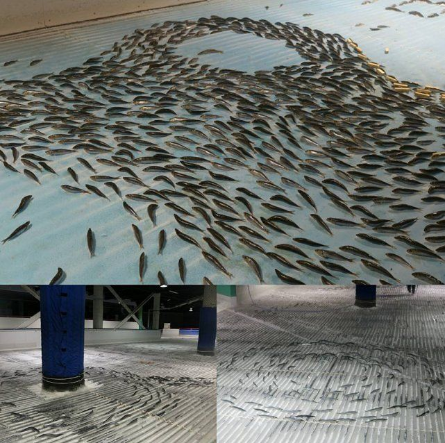 Japanese Frozen fish (image from Facebook)