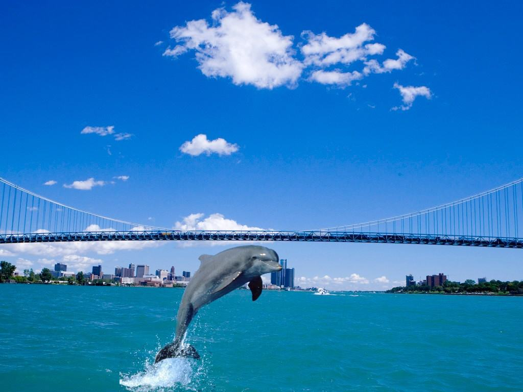 Dolphins spotted on the Detroit River