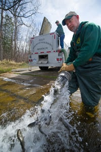 DNR employees stocking fish from truck into water