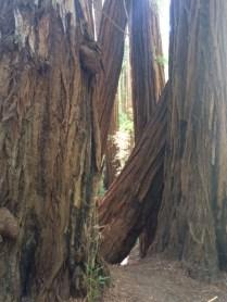 Muir Woods - north of SF - one of my favorite spots