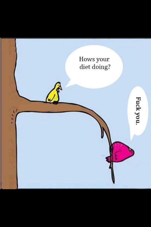 Work Quotes Diet Humor Funny Fitness Workout Birds Fat Diet