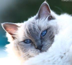 Misty the supermodel kitty.