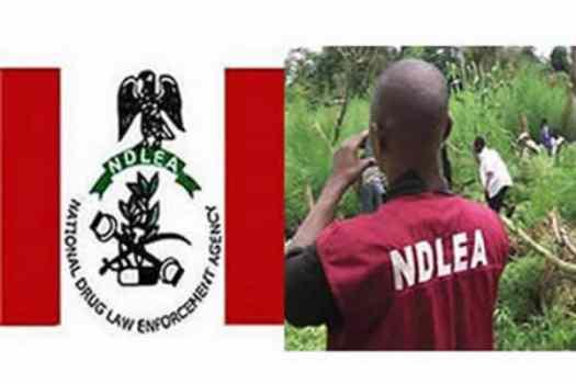 ndlea recruitment 2019 job vacancies