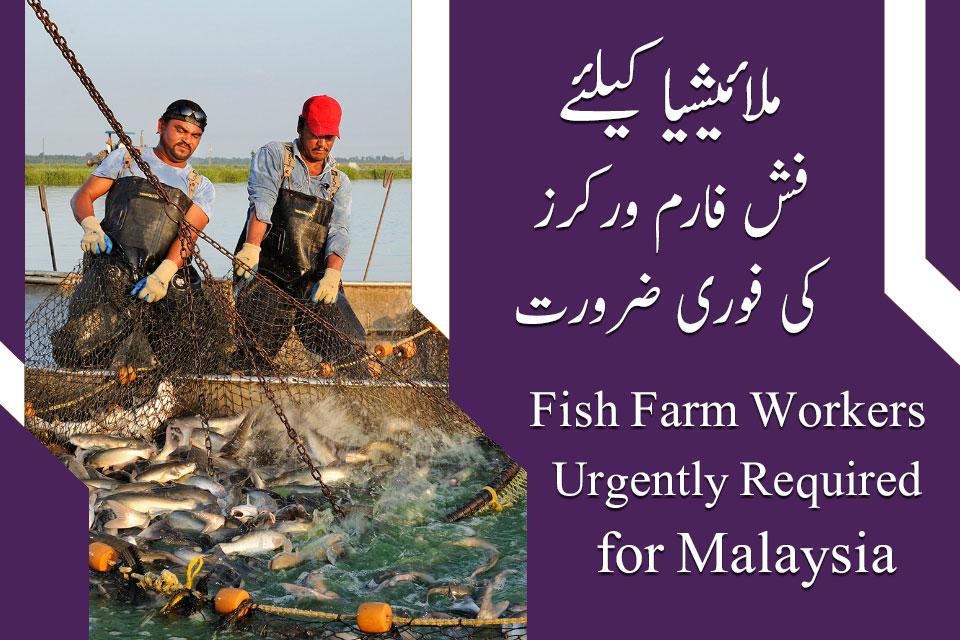 Malaysia Fish Farm Workers Jobs