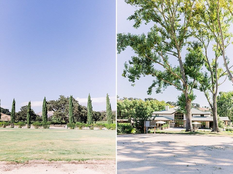 Cyprus trees at Marcella's garden and a second image of the Fess Parker Winery.