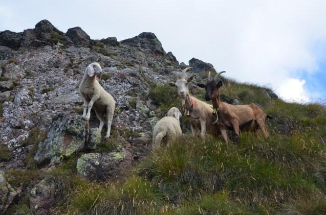 The residents of the Corno Nero