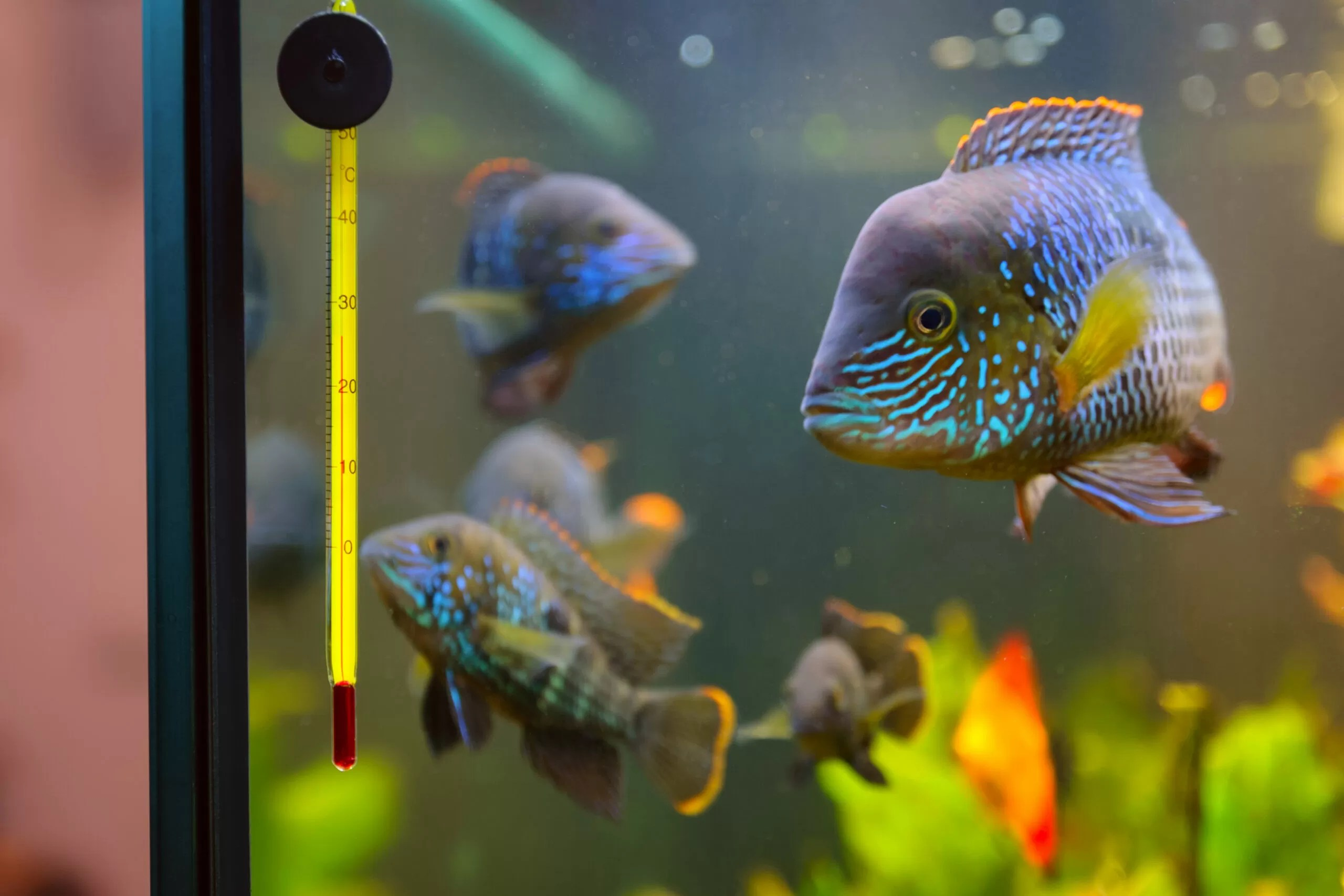 Imagem principal post temperatura em aquários