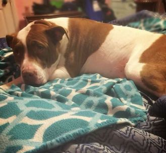 Investigation Underway After Police Shoot And Kill Dog
