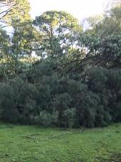 Storm Damage 08-10-18-5DB