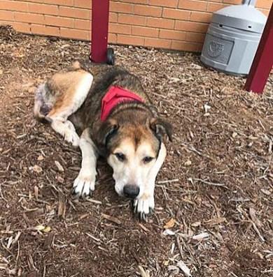 Sasha - Dog 10-10-18-1CP