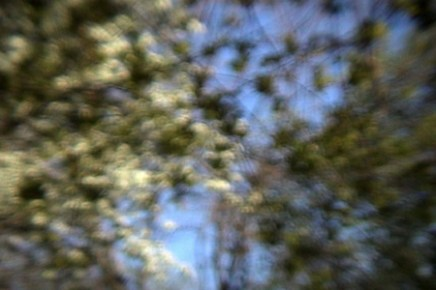 Turner Trees # 4, Early Spring, Archival Digital Print, Various Sizes, 2004