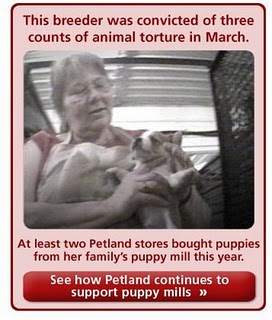 A woman convicted of animal torture