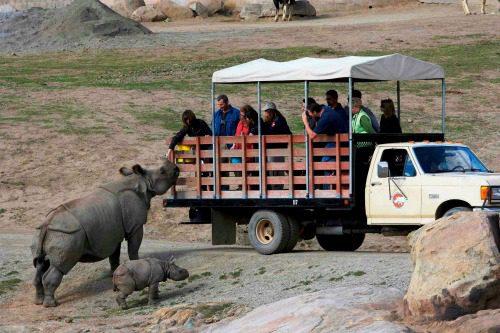 Safari tour at the San Diego Zoo