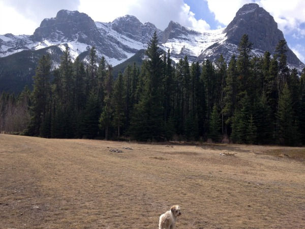 canmore dog park
