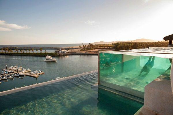 fish tank swimming pool