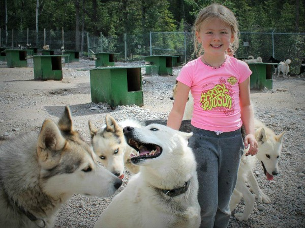 child with sled dogs