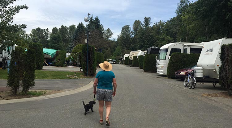Review of the Burnaby Cariboo RV Park, Near Vancouver. The roads are quite wide, so once you are out of your spot, driving around is easy. Here's Maggie and Billy returning from a walk along the Brunette River