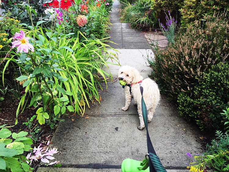 What Can You Do When Your RV is Having Repairs? Pesto and I enjoyed many walks in a tree-filled neighborhood full of craftsman-style houses