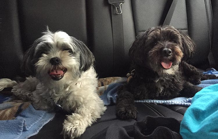 Billy and Ripley traveled really well in the back of the truck