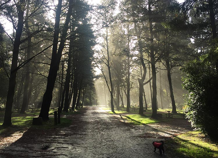 Review of Fort Stevens State Park, Northern Oregon Coast. Joe found that he could let our dogs off leash in one of the closed areas without bothering anyone