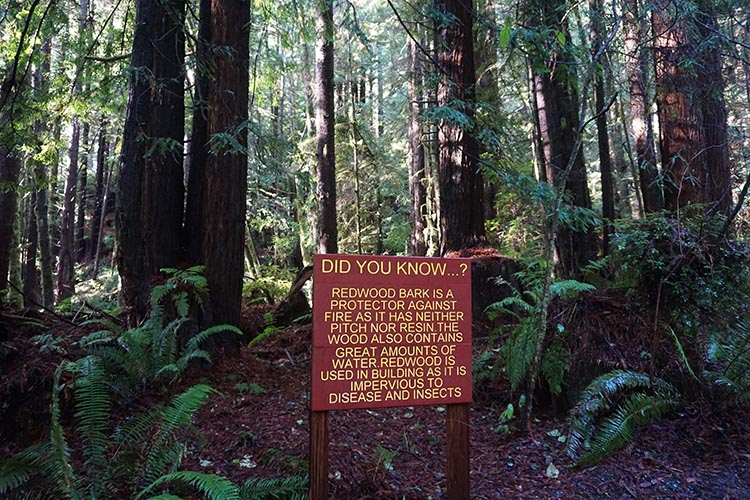 We learned a lot about giant redwood trees