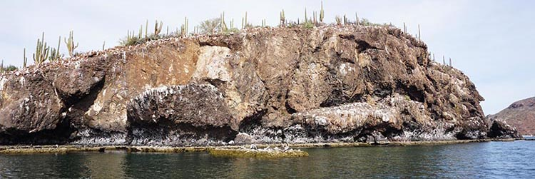 Most of the small islands in Bahia Concepcion are coated in guano