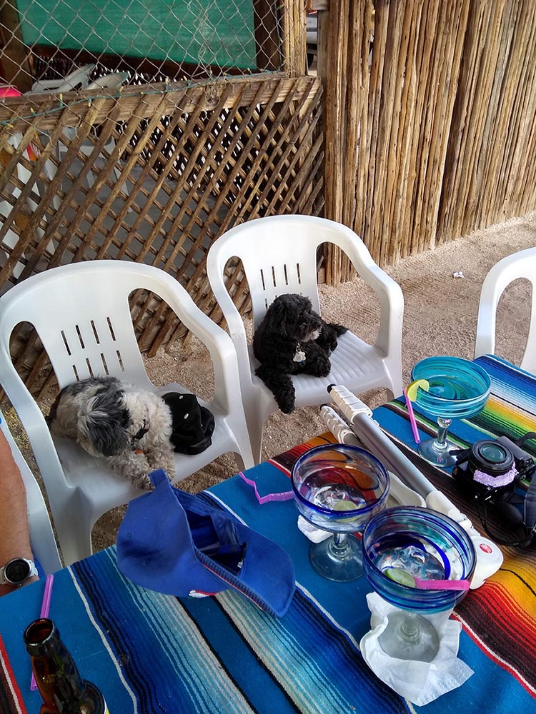 Here are our dogs at Armando's Restaurant! Photo by Alison Youngs