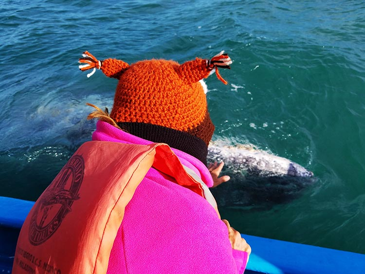 Our Return RV Caravan Trip from Baja California: Santispac Beach to Tecate. Some of our group got to touch a whale. Here's Nancy getting close to a whale - Photo by Juli Cooley