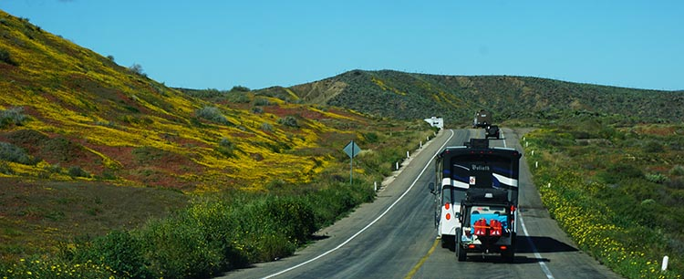 Our Return RV Caravan Trip from Baja California: Santispac Beach to Tecate. Also, thanks to the unseasonal rain, there were many yellow poppies in bloom