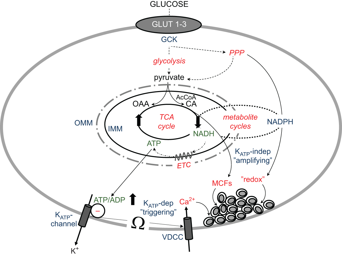 The Pathogenetic Role Of Cell Mitochondria In Type 2