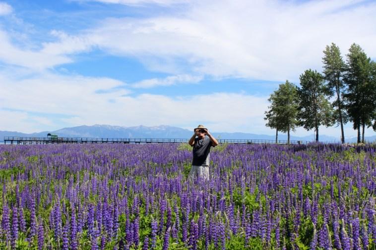 Lake Tahoe, CA. Joe in the Lupine Meadow.