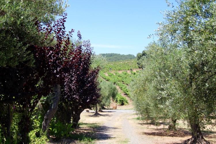 Sonoma Valley. Glenn Ellen, CA. B.R. Cohn Winery and Olive Oil Company