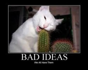 bad ideas - cat cactus