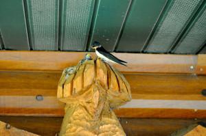 Trading Post Birds 3