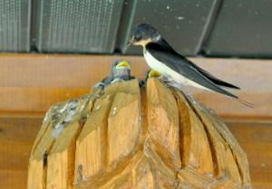 Trading Post Birds 4
