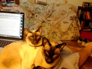 Writing; no we don't think so--not on our lap. (Siamese cats)