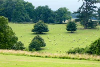 """Trip - The sheep """"next door"""" to Highclere Castle"""