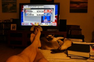 Election Cats