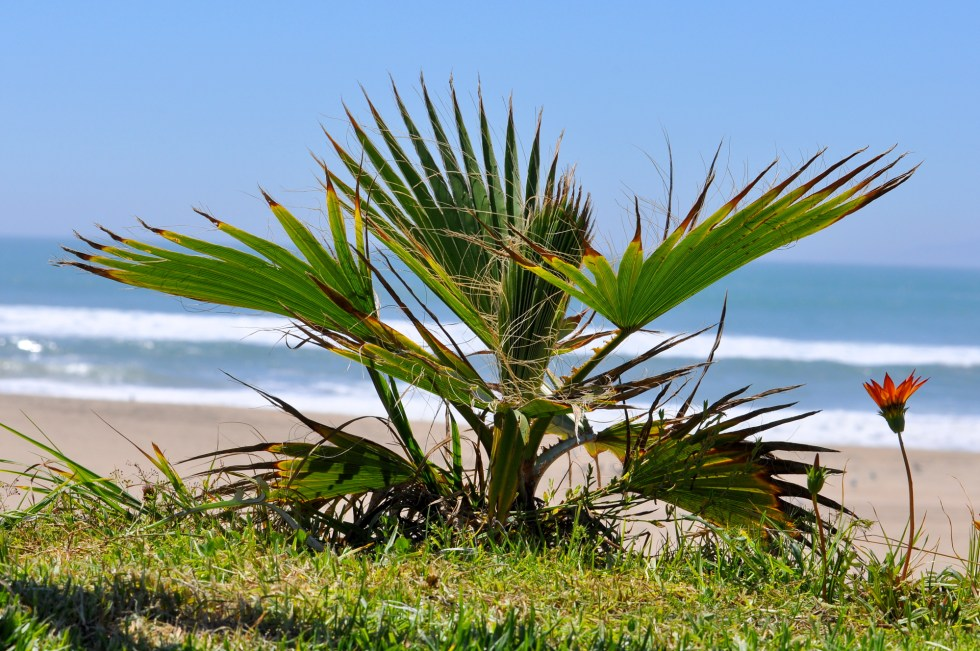 Palm View of the Pacific