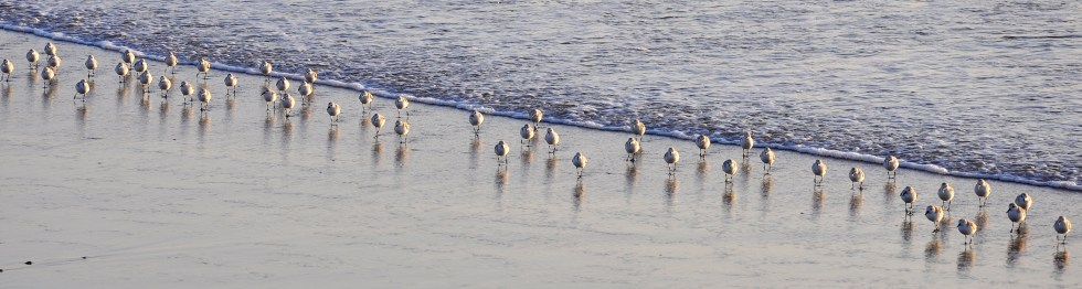 Huntington Beach Surf Birds
